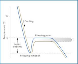 Freezing Point Osmometer Measuring Process